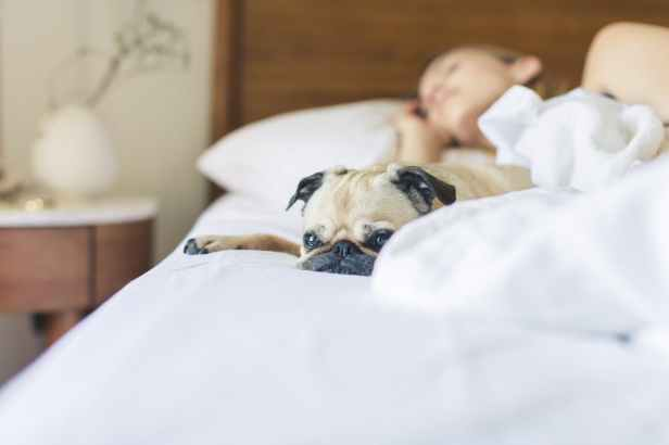 bed bedroom blanket blur